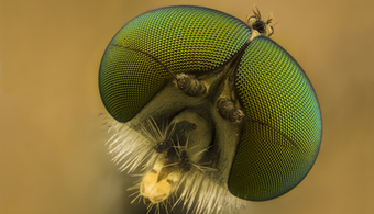 Insect Eyes Inspire Coating Technology