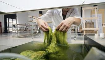 Researchers Develop Plastic Out of Pond Scum